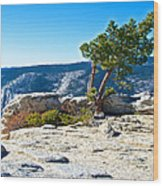 Windswept Tree On Top Of Sentinel Dome In Yosemite Np-ca Wood Print