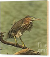 Windy Morn Green Heron Wood Print