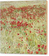 Windy Poppies At The Fields Wood Print