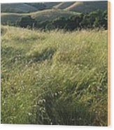Wine Country Hills Wood Print