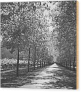 Wine Country Napa Black And White Wood Print by Suzanne Gaff