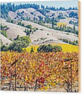 Wine Country Napa C.a. Wood Print