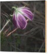 Wine Cup Wildflower Wood Print