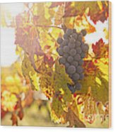 Wine Grapes In The Sun Wood Print
