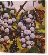Wine Grapes On The Vine Wood Print