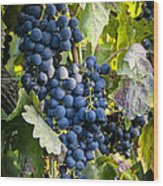 Wine Grapes Wood Print by Tetyana Kokhanets