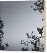 Wing Stretch Wood Print