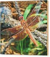 Winged Wonder Wood Print