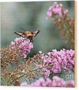 Wings In The Flowers Wood Print