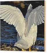 Wings Of A White Duck Wood Print