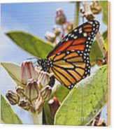Wings Up Monarch Butterfly By Diana Sainz Wood Print