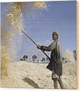 Winnowing Wheat In Iran Wood Print