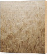 Winsome Wheat Wood Print by Amy Tyler