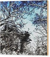 Winter Along The Bronx River Wood Print