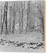 Winter And The Wall Wood Print