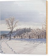 Winter At Scarborough Bluffs Wood Print