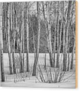 Winter Birches Wood Print