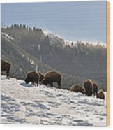 Winter Bison Herd In Yellowstone Wood Print