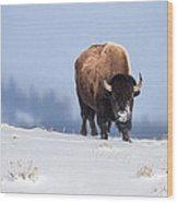 Winter Bison Wood Print