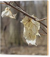 Winter Bleached Leaves Wood Print