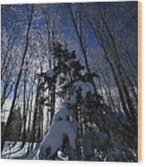 Winter Blue Wood Print by Karol Livote