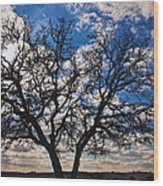 Winter Blue Skys Wood Print