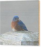 Winter Bluebird Wood Print