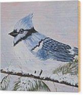 Winter Bluejay Wood Print