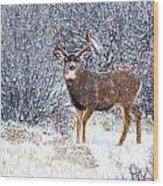 Winter Buck Wood Print by Darren  White