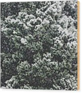 Winter Bush Wood Print