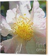 Winter Camellia Wood Print