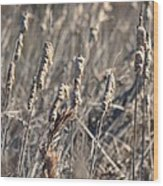Winter Cattail Abstract Wood Print