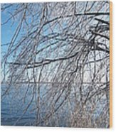 Winter Chill Wood Print by Margaret McDermott