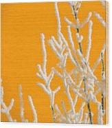 Winter Colors Wood Print