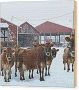 Winter Dairyland Wood Print