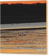 Winter Dawn Swans Wood Print