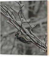 Winter Downy Wood Print