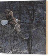 Winter Eagle Flight Wood Print