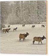 Winter Elk Wood Print