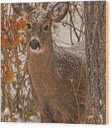 Winter Fawn Wood Print
