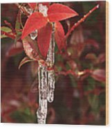 Winter Flower Wood Print