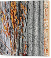 Winter Foliage Tin 13134 Wood Print