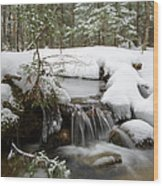 Winter Forest - Lincoln New Hampshire Usa Wood Print