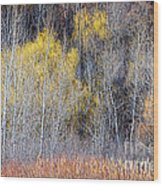 Winter Forest Landscape With Bare Trees Wood Print