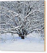 Winter Fresh Wood Print