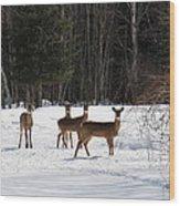 Winter Friends  Wood Print