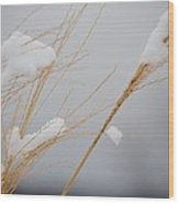 Winter Grasses Iv Wood Print