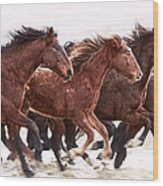 Winter Hardened Wild Horses Wood Print