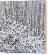 Winter Haven 2 Wood Print