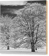 Winter Horse Chestnut Trees Monochrome Wood Print